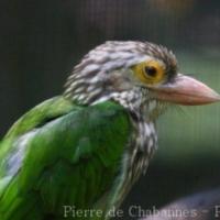 Birds (13)