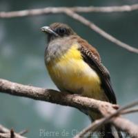 Birds (9)
