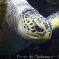 Chelonians (4)