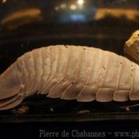 Crustaceans (1)