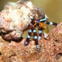 Crustaceans (2)
