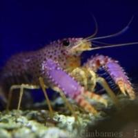 Crustaceans (3)