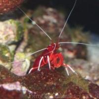 Crustaceans (5)
