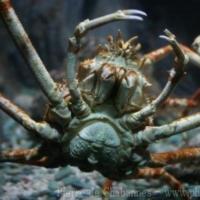 Crustaceans (6)