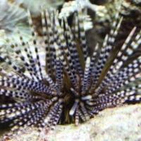 Echinoderms (1)