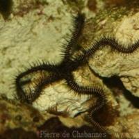 Echinoderms (2)
