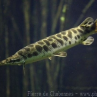 Fishes (10)