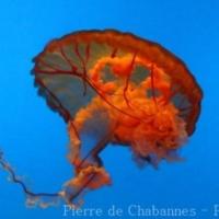 Marine Invertebrates (1)