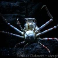 Marine Invertebrates (3)