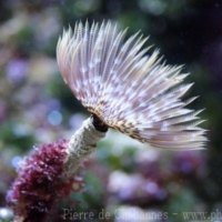 Marine Invertebrates (6)