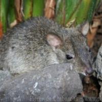 Marsupials (2)