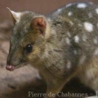 Marsupials (4)