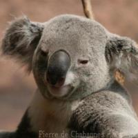 Marsupials (5)