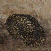 Marsupials (7)