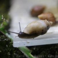Other Invertebrates (3)