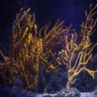 Other Marine Invertebrates (3)