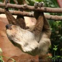 Other mammals (1)
