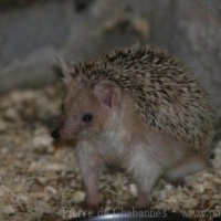 Other mammals (3)