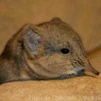 Other mammals (5)