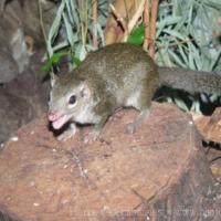 Other mammals (6)