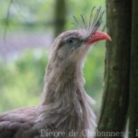 Otidiformes (2)