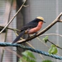 Passeriformes (12)