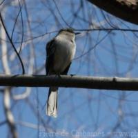 Passeriformes (15)