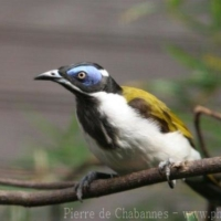 Passeriformes (7)