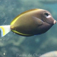 Perciformes (1)