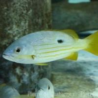 Perciformes (15)