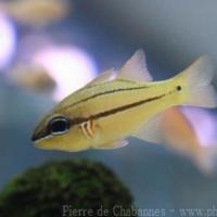 Perciformes (2)