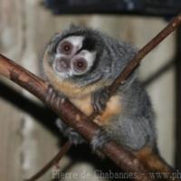 Primates (1)