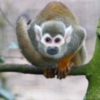 Primates (10)