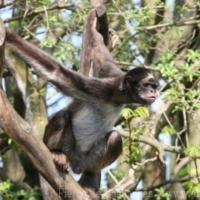 Primates (2)