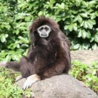 Primates (3)