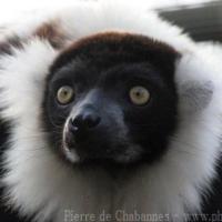 Primates (4)