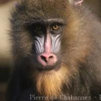 Primates (5)