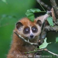 Primates (7)