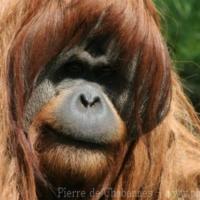 Primates (8)