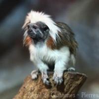 Primates (9)