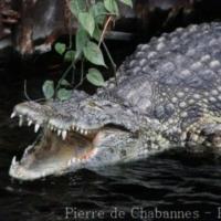 Reptiles (3)