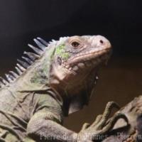 Reptiles (4)