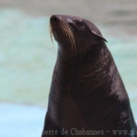 Sea Mammals (1)