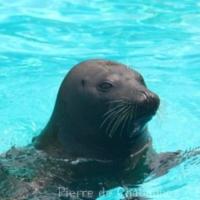 Sea Mammals (3)