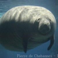 Sea Mammals (4)
